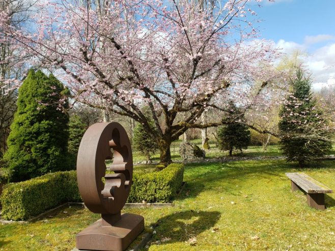 Flowering cherry tree with Arnie Garborg's sculpture 'Contemplation'