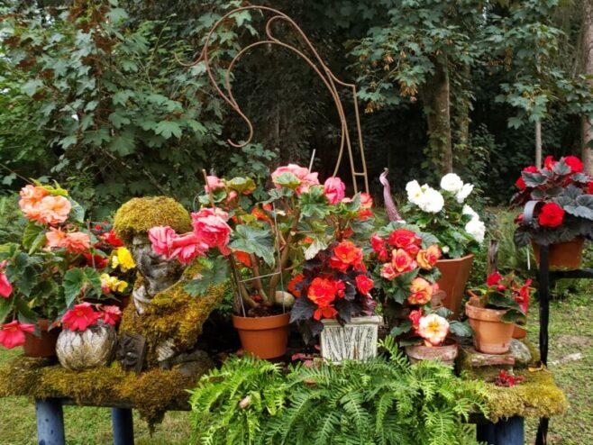 Bassetti's Gardens, begonias