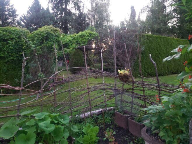Bassetti's gardens, wattle fence